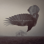 "Katatonia – ""The Fall Of Hearts"""